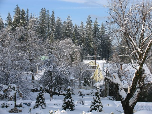 A Winter view from the back yard